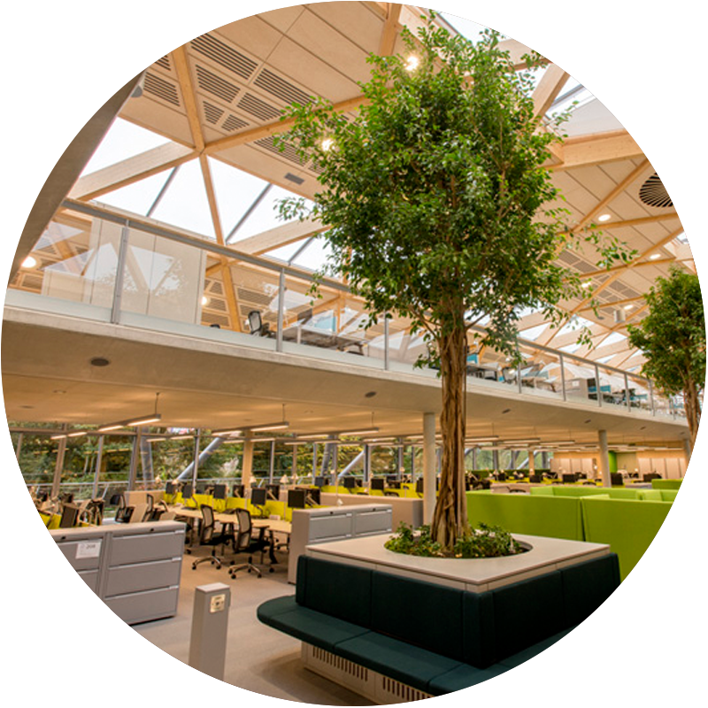 WWF-living-plant-centre-workplace-week-london